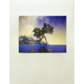 Print_Parrish_ClassicEdition_Aquamarine